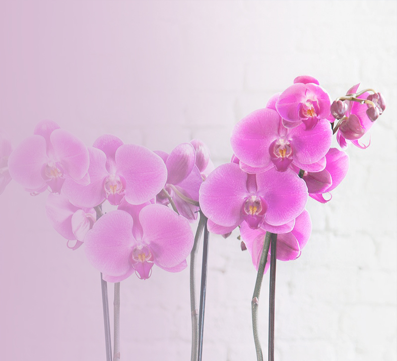 Web Design  and E-commerse Mississauga - 4 Orchids